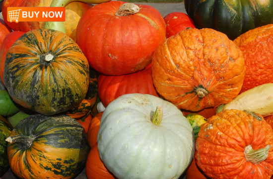 Pumpkins Colorful 292