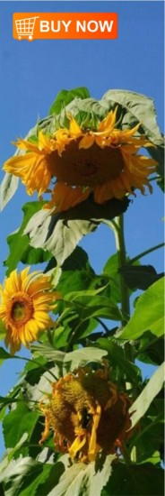 Sunflower-Bookmark
