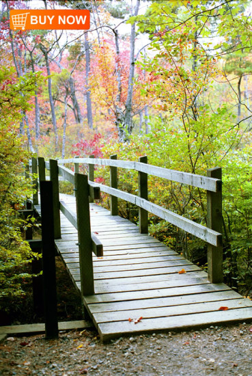 Walkway with Fall Leaves