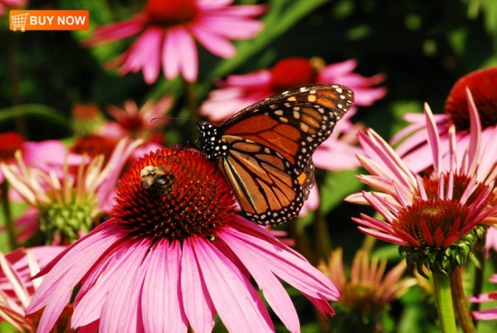 Coneflower With Bee and Butterfly 406
