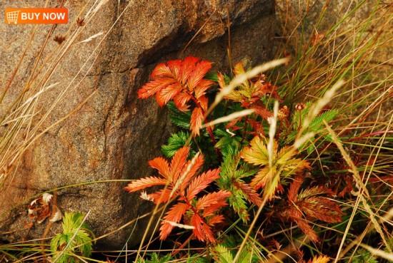 Fall Leaves Near Rocks 404
