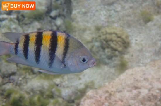 Nemo 436