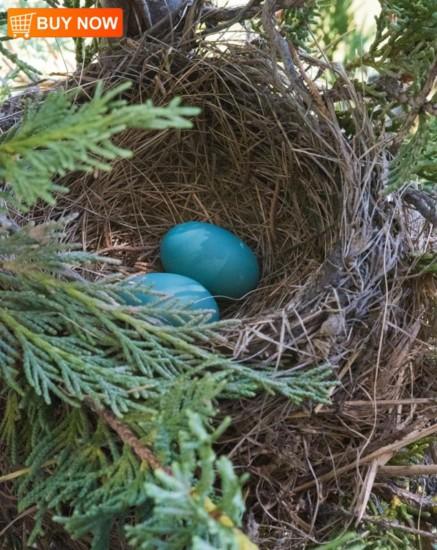 Robins Nest 438