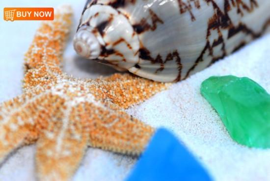 Sea Star Seaglass and Shell