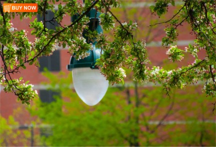 Street Light and Apple Blossoms