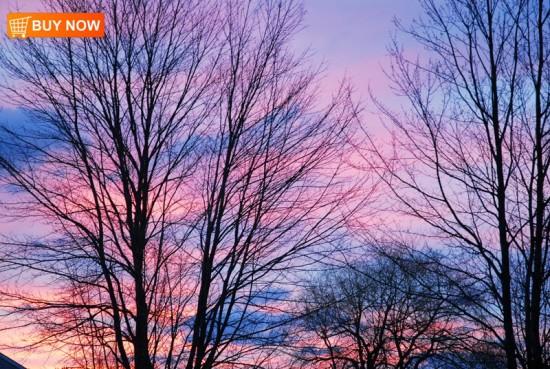 Sunrise 369