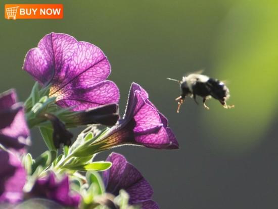 Superbells With Bee