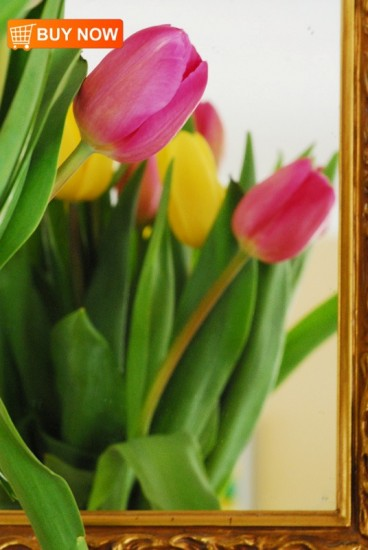 Tulips in Mirror